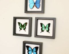 framed butterfly set