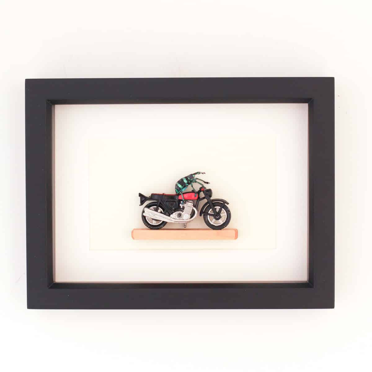 beetle riding motorcycle