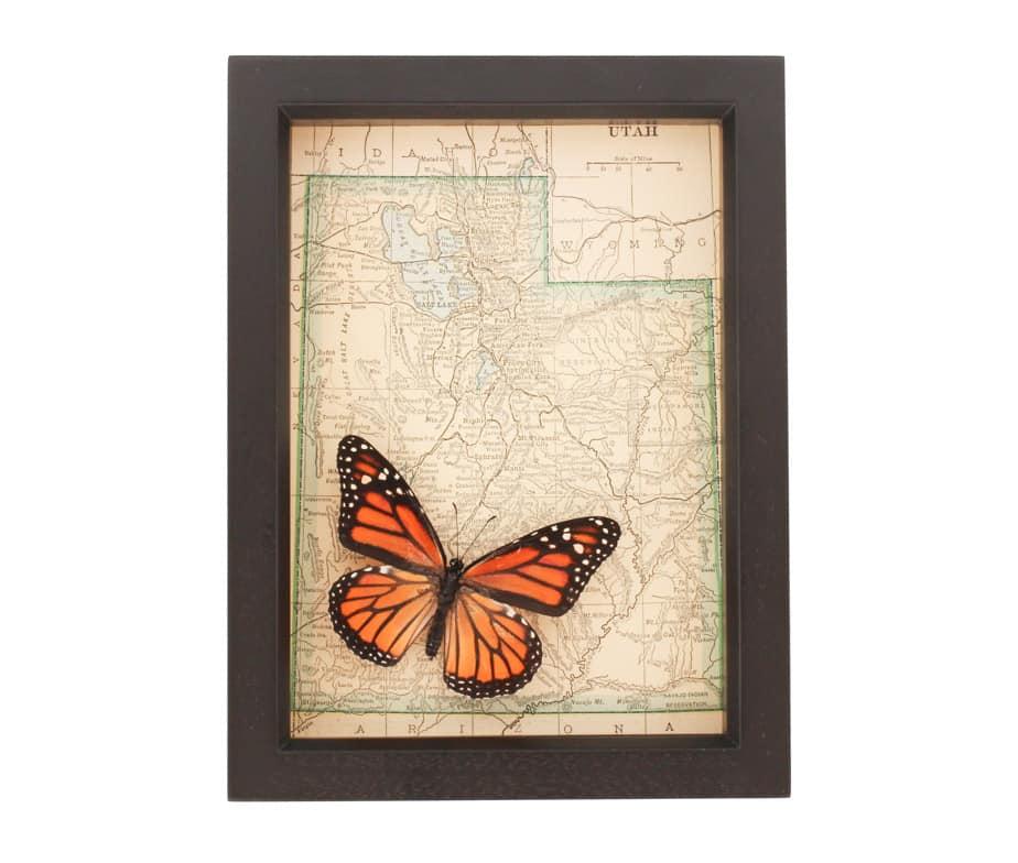 Monarch Butterfly Art | Framed Map Utah | Bug Under Glass