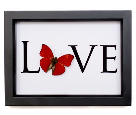 real butterfly with word love