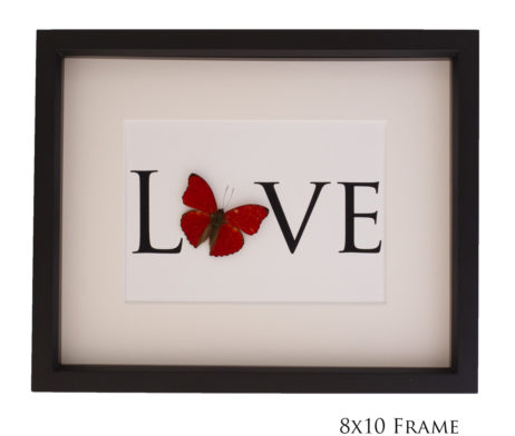 real butterfly love print