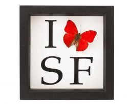 i love san francisco butterfly