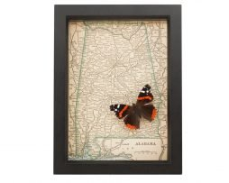 framed map alabama red admiral