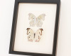 framed butterfly collection Mother of Pearl