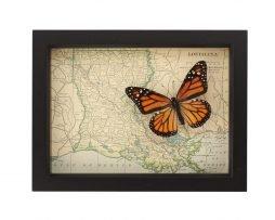LOUISIANA-butterfly-map