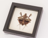 framed praying mantis