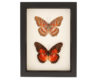 collection of insects for sale