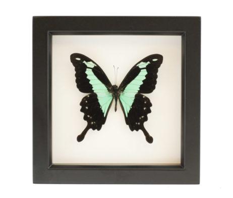 framed butterfly decor