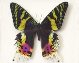 Framed Moths