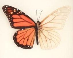 Skeleton Butterflies™