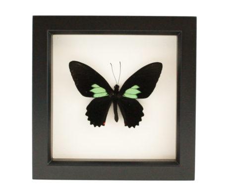 framed emerald cattleheart